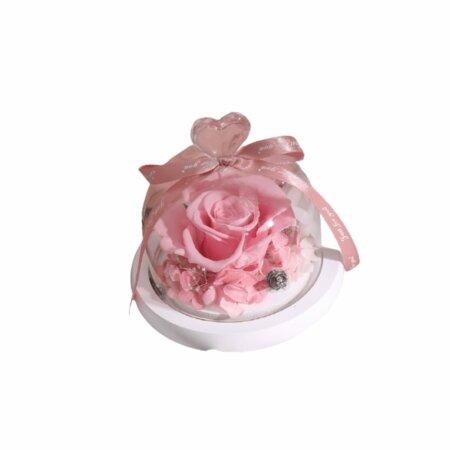 eternal rose in blush